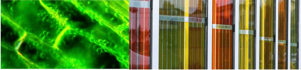dye-sensitized solar cells (DSSC)
