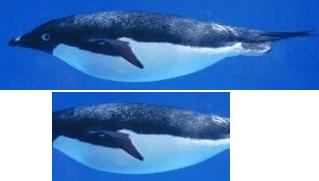 penguine2 - floating turbine body