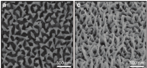 SEM image showing the randomly distributed nanostructures on a piece of Greta oto wing (modified from [])