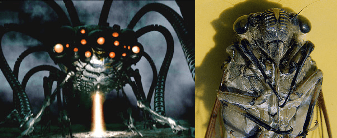 Left: A Sentinel machine from The Matrix. Right: Giant Sumatra Cicada. Sources: The Matrix, Wikipedia Commons; Insect-Inspired Robotics