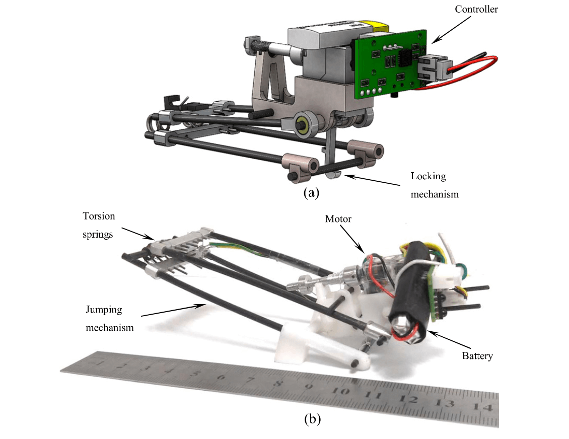 Locust-inspired jumping robot. Source: Zaitsev et al 2015. Insect-Inspired Robotics
