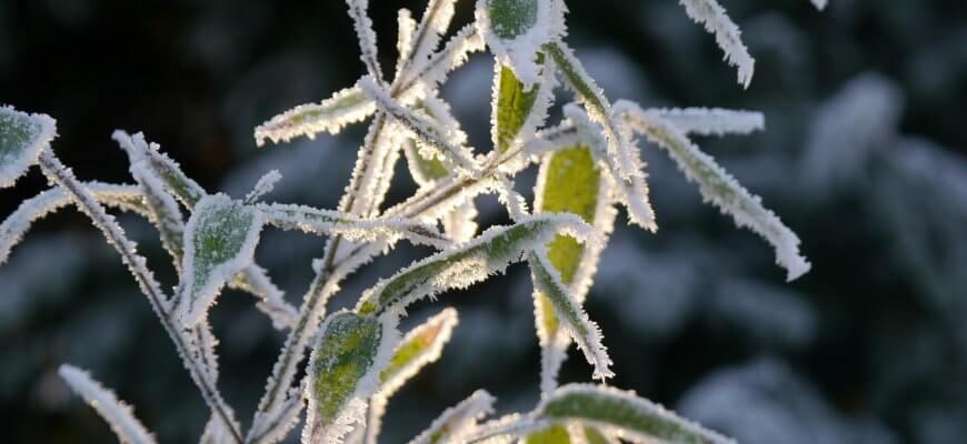 ice-1580057_1280